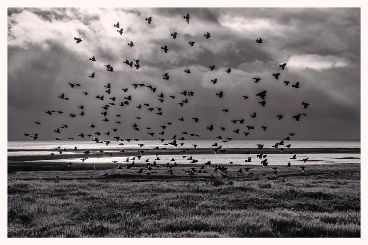 flock birds, Vallejo, CA - guillermoalvarez | ello