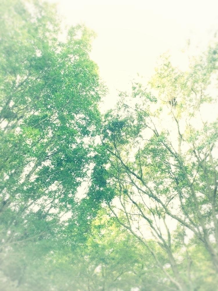 Tree Jungle Apps - mikefl99, ello - mikefl99   ello