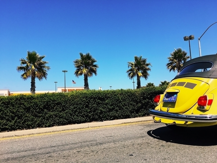 Chasing sunshine - vw, bug, volkswagen - tramod | ello