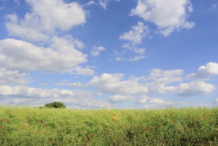 landscape, sky, bluesky, clouds - martinkriz | ello