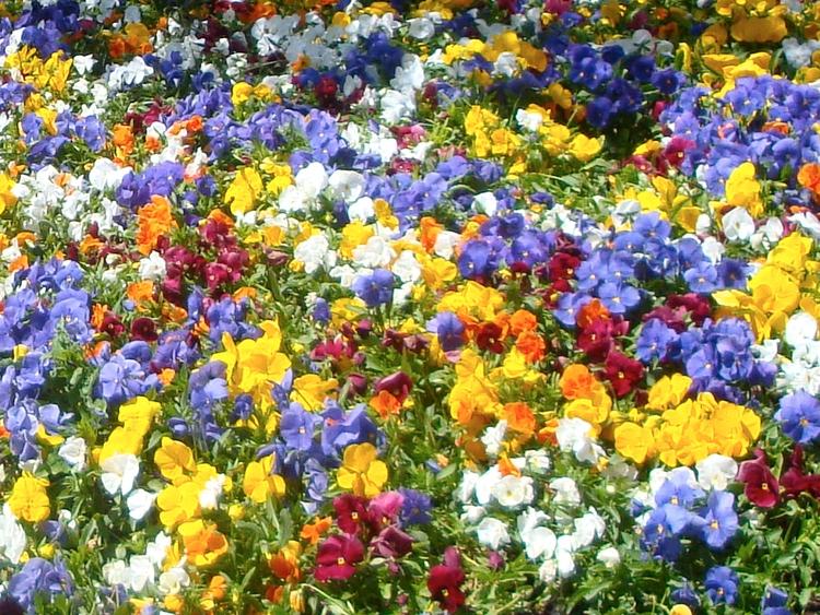 Floreira em Montserrat, é um ma - antoniomg   ello