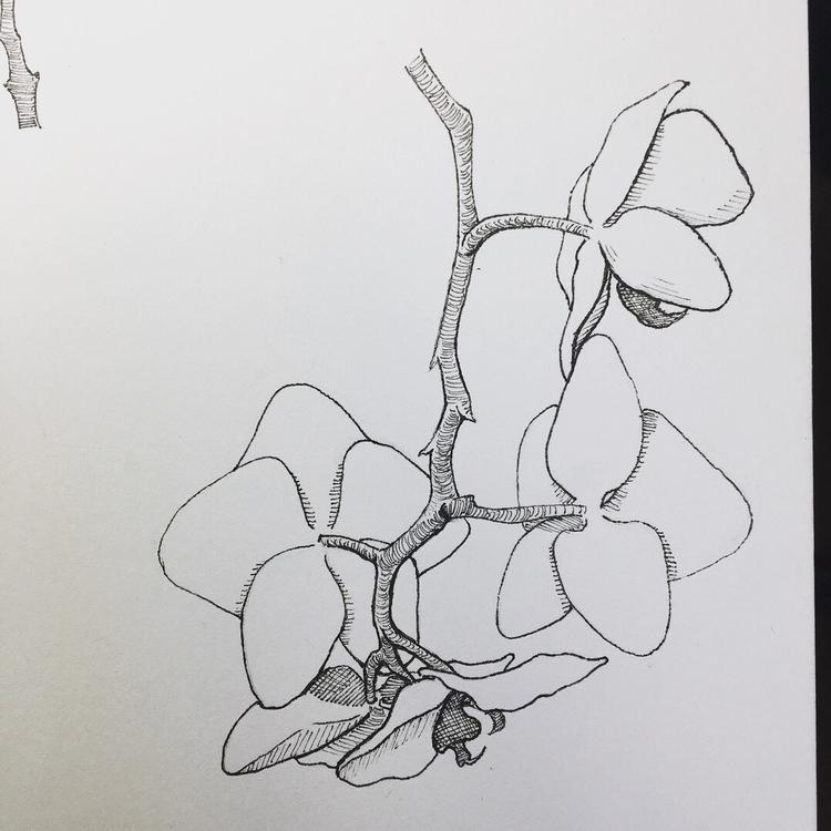 Phalaenopsis - illustration, botanic - spiro_draws | ello