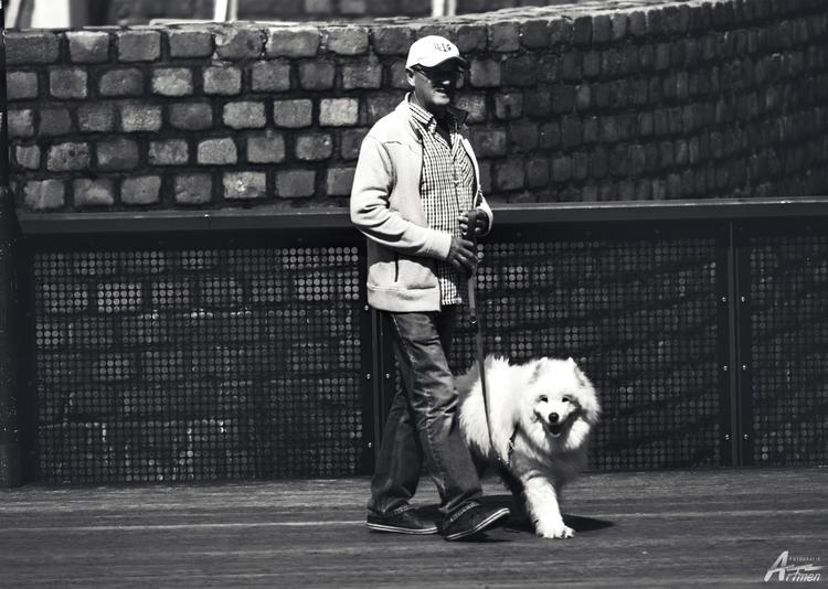 leave dog. wife - artmen | ello