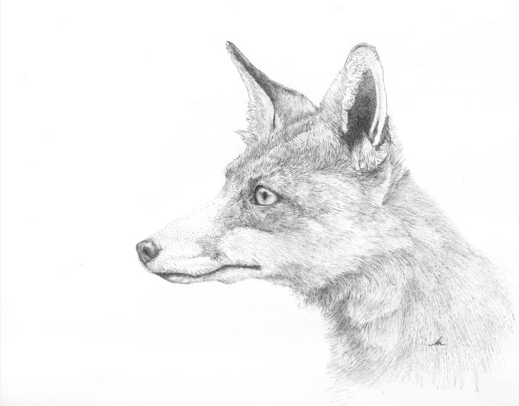 Fox pen 10'x10', Bristol, Rotri - artmmm | ello