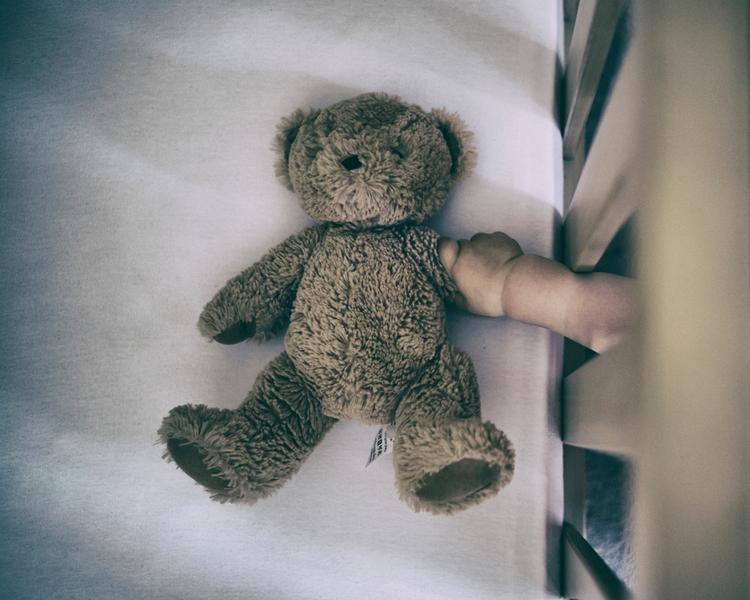 teddy bears speak bear - portrait - darryl_s   ello