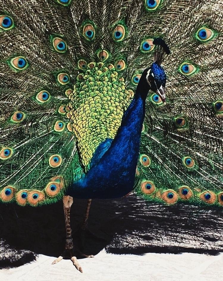animals, amazing, colorful, blue - isabelrobles | ello