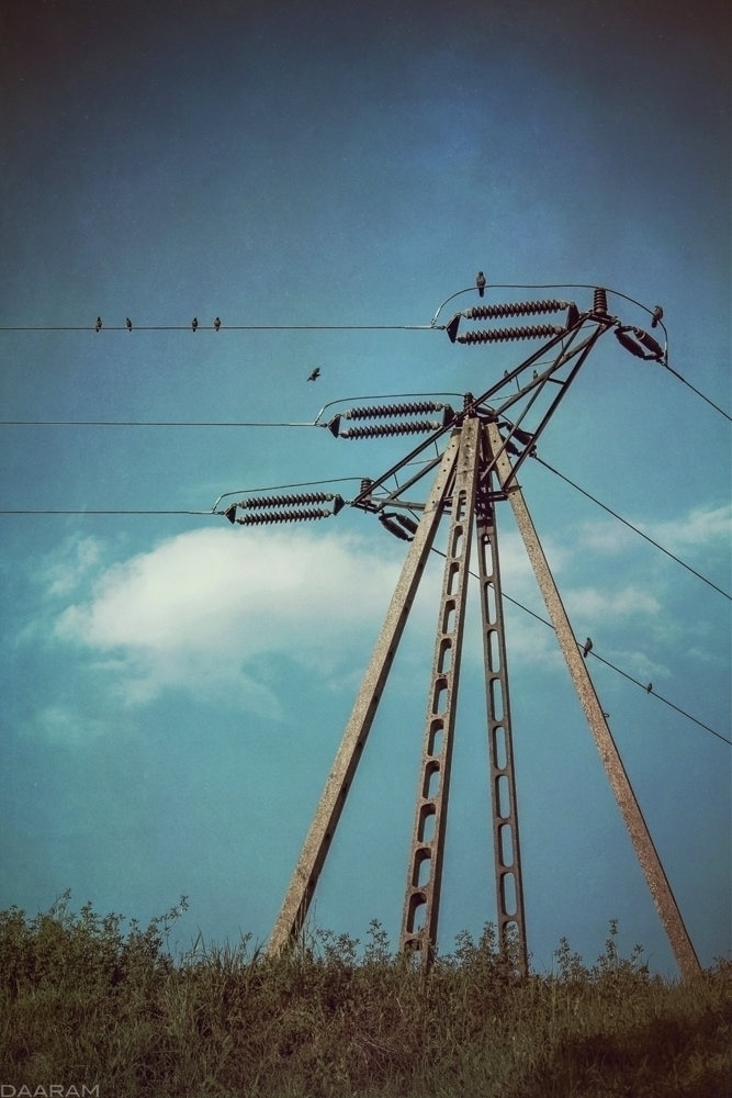Birds Notes: street Sosnowiec,  - daaram | ello
