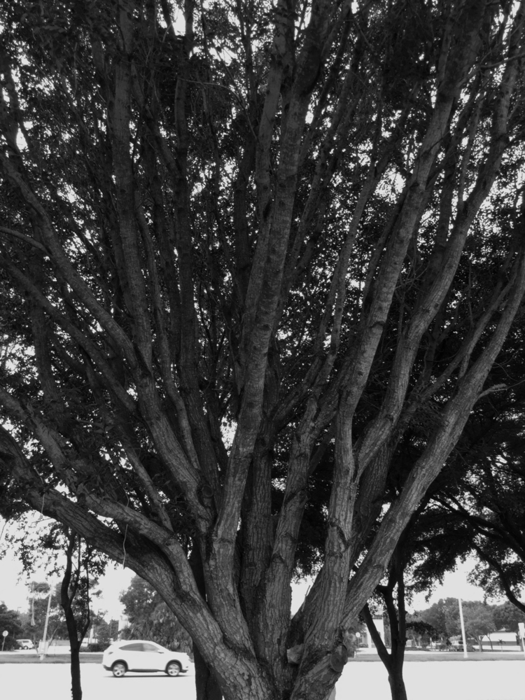 Huge Tree Street Apps - mikefl99 - mikefl99 | ello