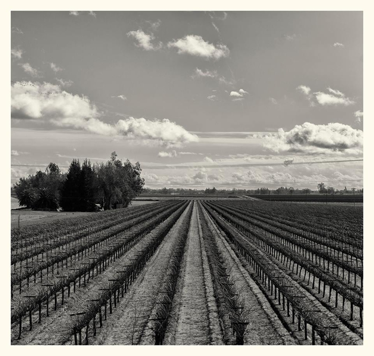 Screibner Vineyards, Elk Grove - guillermoalvarez | ello