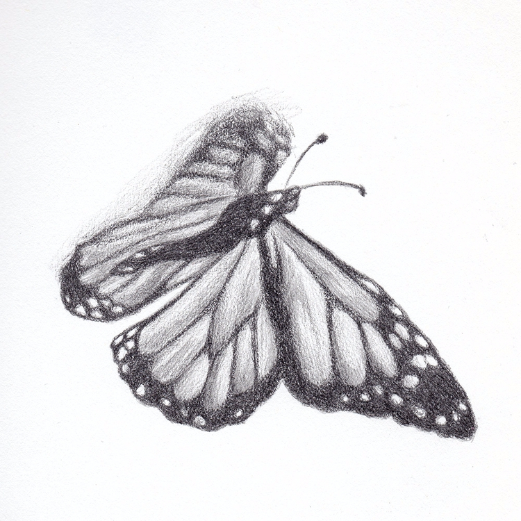 Monarch graphite. Project - 102 - mydiagonallife   ello