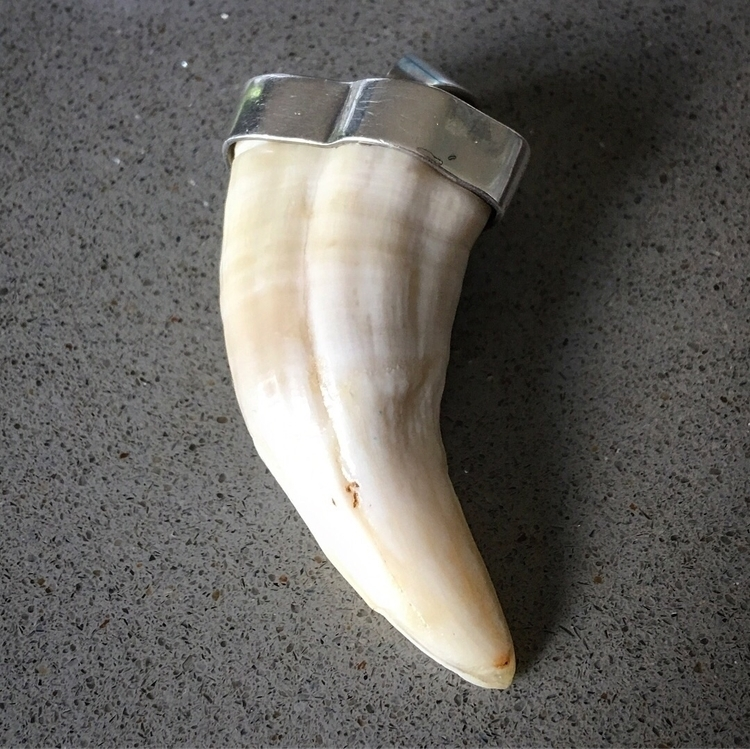 sea lion tooth find market! Ori - thewhaledentist | ello