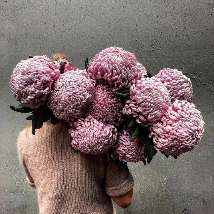 gay, flowers, plants, flower - abaeterno   ello
