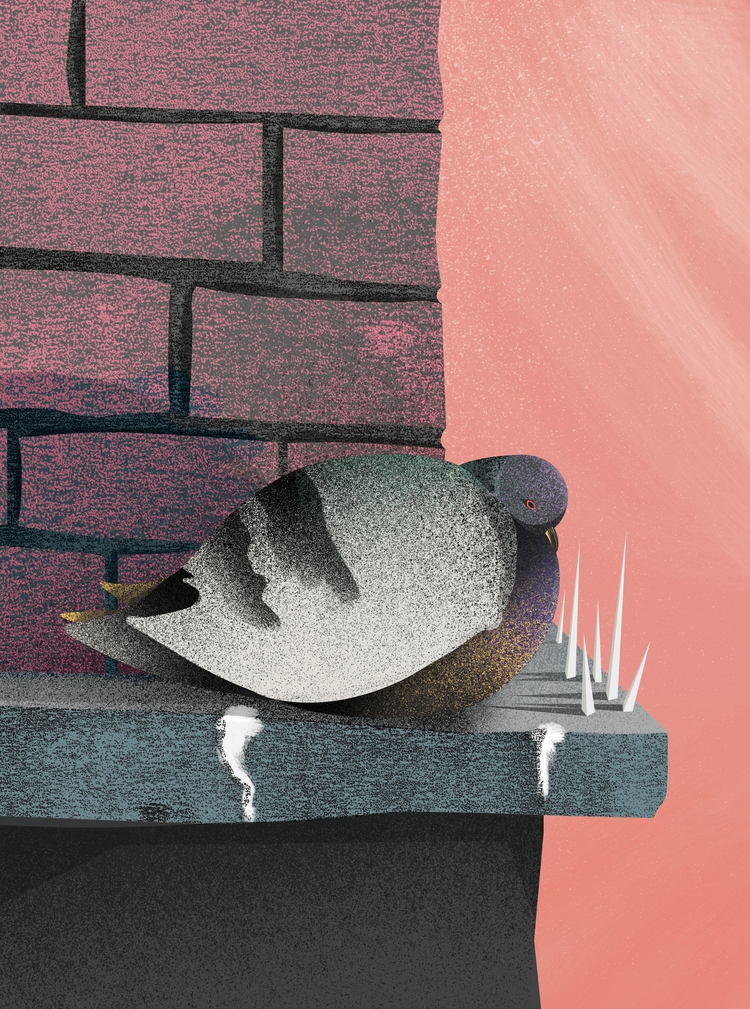 Fat Broody Pigeon - Illustratio - tomscampsite | ello