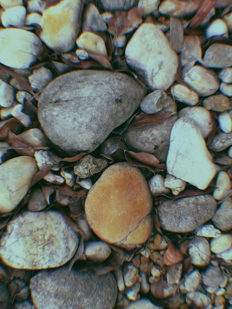 Front Yard Pet Rock Garden Apps - mikefl99 | ello