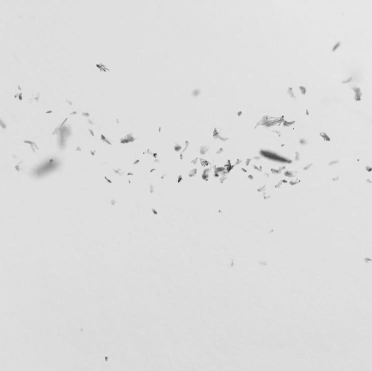 fuck - spider., houseflies - davidpraznik | ello