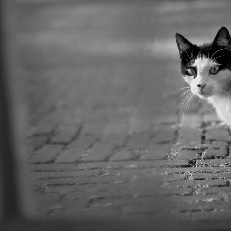 cat - animals, blackandwhite, GX7 - klaasphoto | ello
