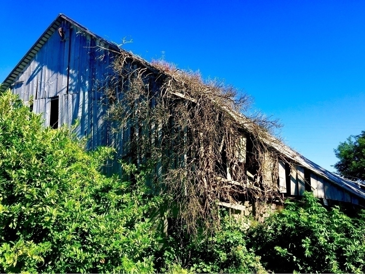 Nature, Barn, photography, architecture - spiketwopointo | ello