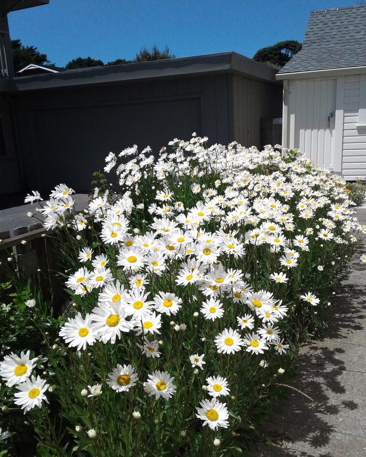 daisies - worldgoesround | ello
