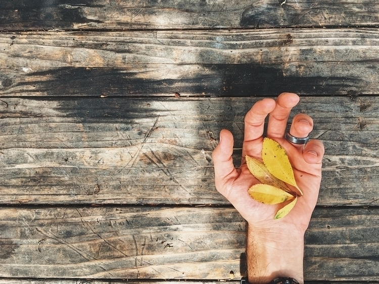 leaves - fall, bench - tramod | ello