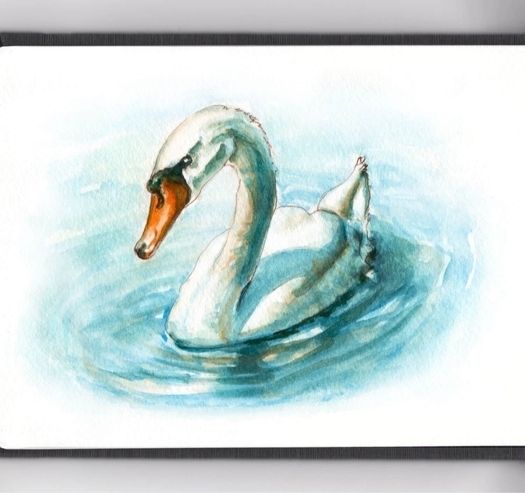 - Day 23 Swan Colors - WorldWatercolorMonth - doodlewash | ello