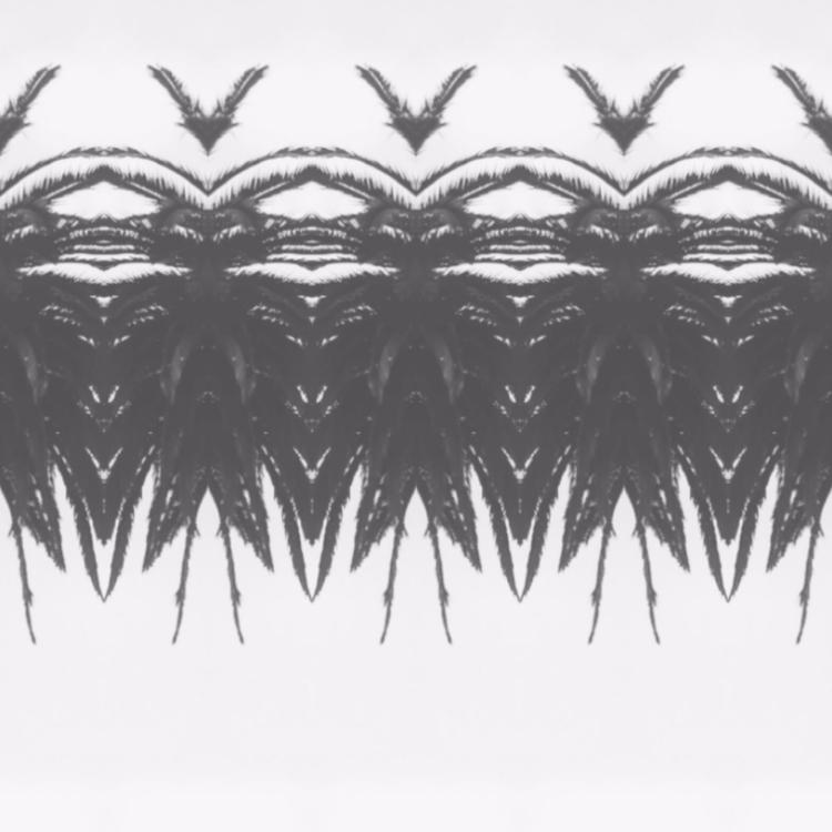 MetaMorphosis - insect, layout, blackandwhite - valenvq | ello