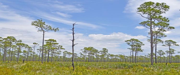 Everglades , Florida - panamapete | ello