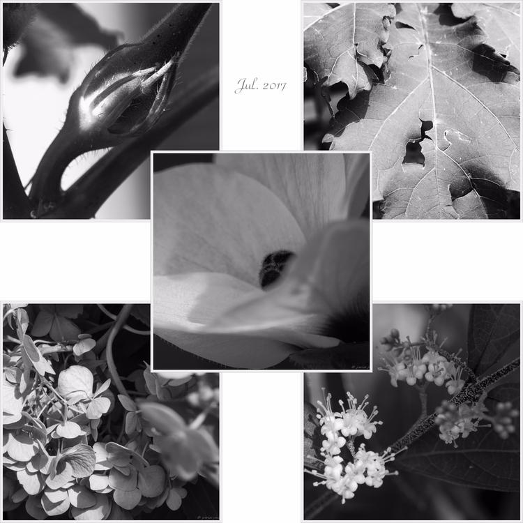 いのちつなぐものたち Generations - Jul. 2 - juria | ello