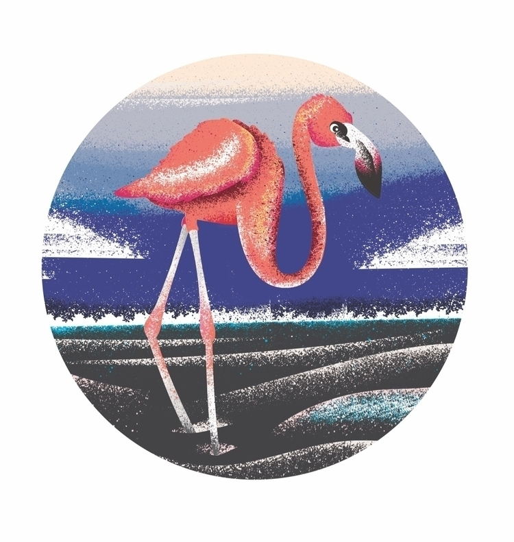 FLAMINGO - flamingo, animal, wildlife - tomscampsite | ello