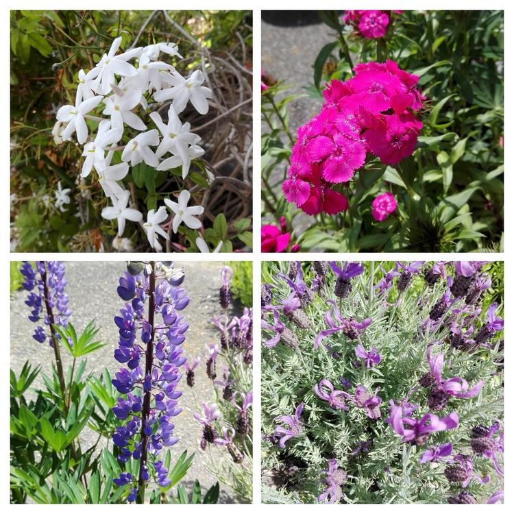flowers, photography - sanftekuss | ello