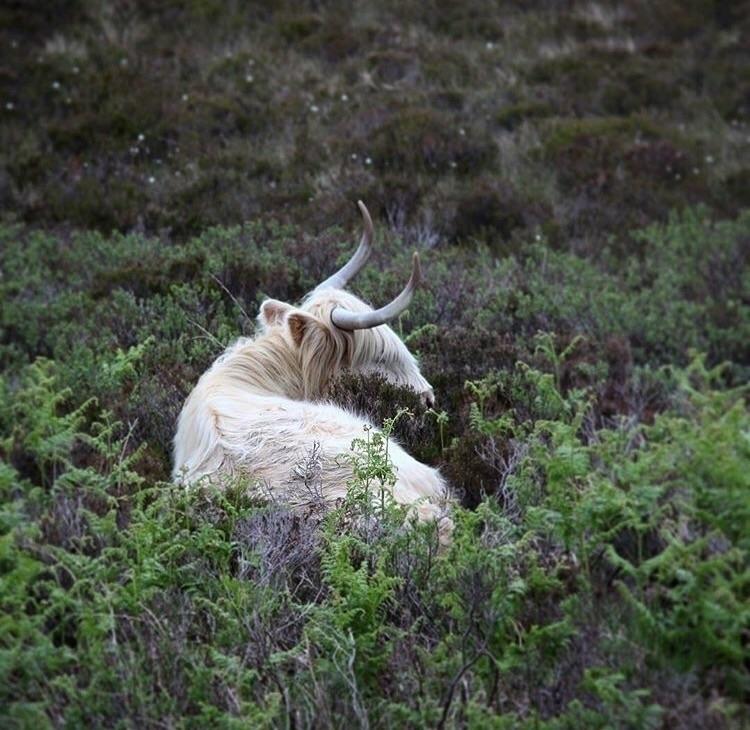 Coo - Scotland, nature, photography - latasham | ello
