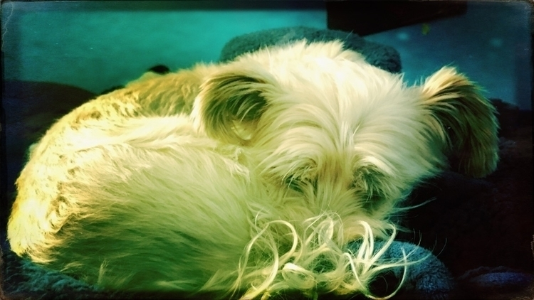 Tippy, love sleeping - Dog, Photo - tippy1231 | ello