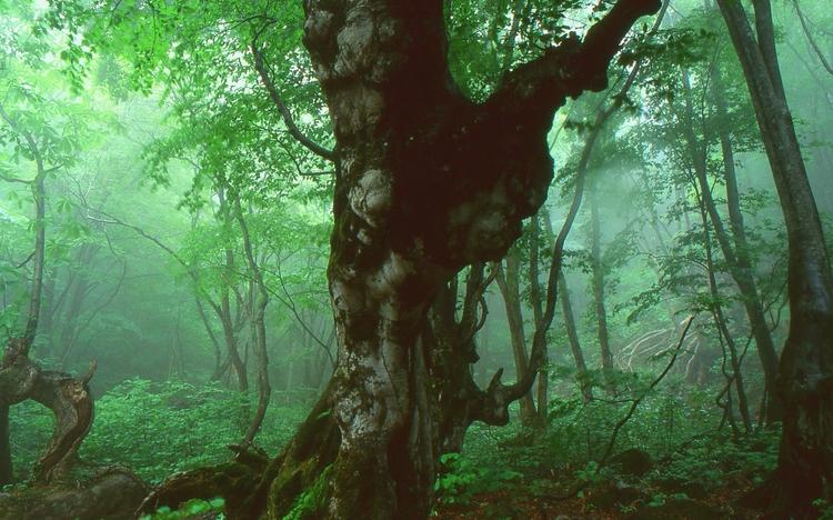 Deep Mist Forest walked drizzly - chikaraamano | ello