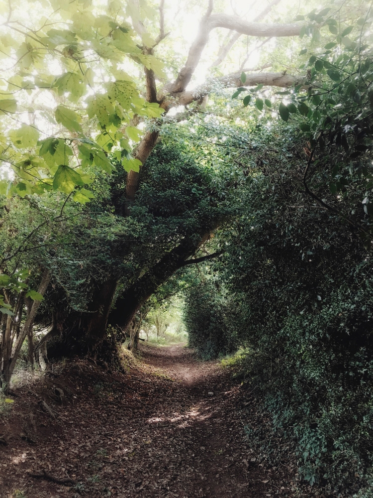 pictures wander 'Dead Lane' Hit - julian_calverley | ello