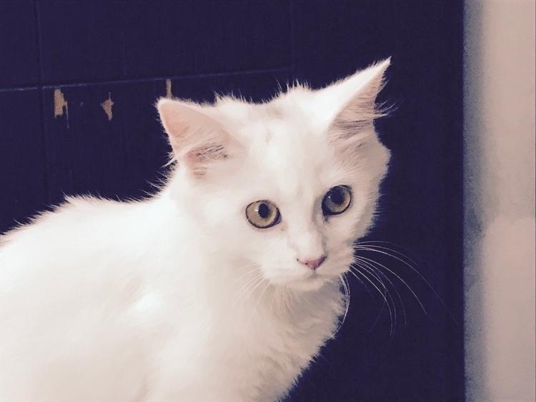 cat, whitecat, furry, iphone7 - adnanadilzuberi | ello