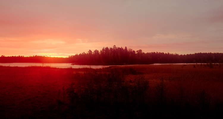photography, forest, sweden, sunrise - berrick | ello