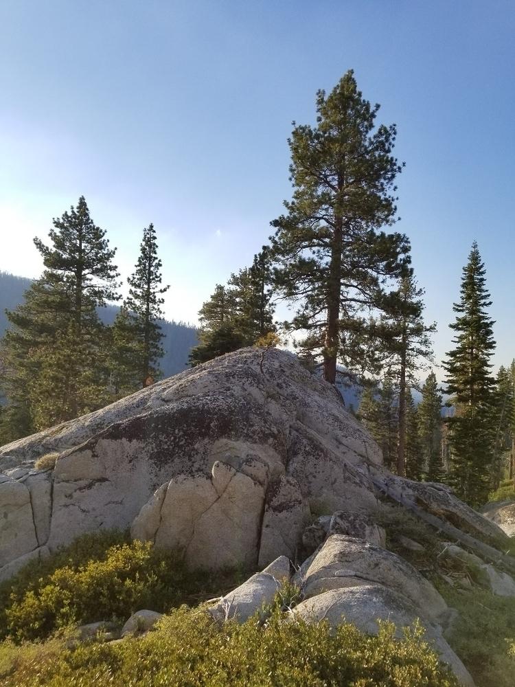 baby tree growing boulders - anarcho-vegan | ello