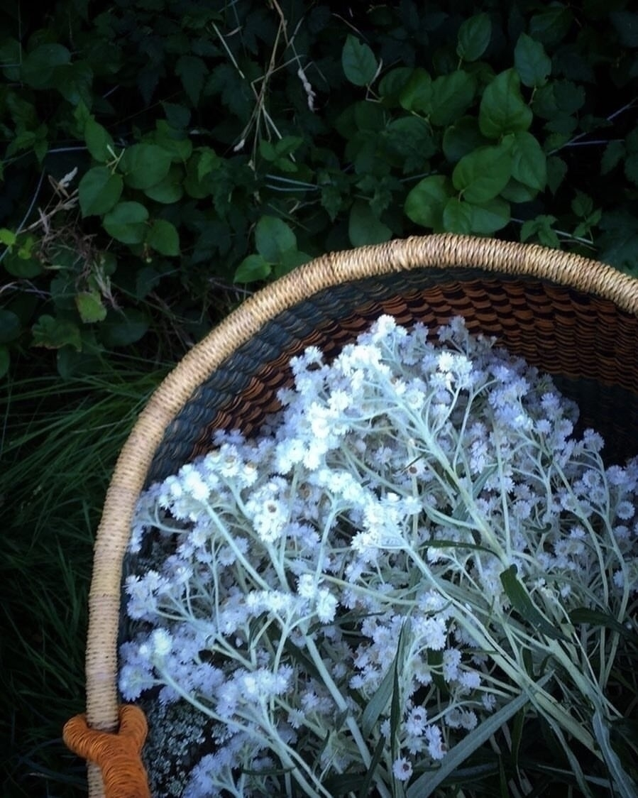 latest wildcraft find? harvesti - thewitch   ello