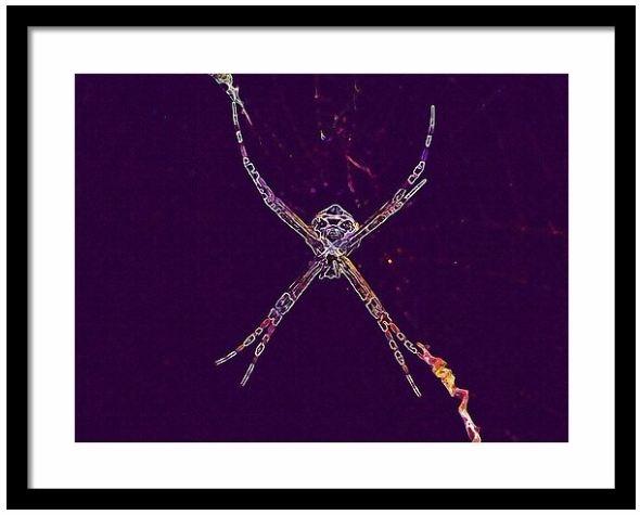 Spider Insect Arachnophobia Fra - pixbreak | ello