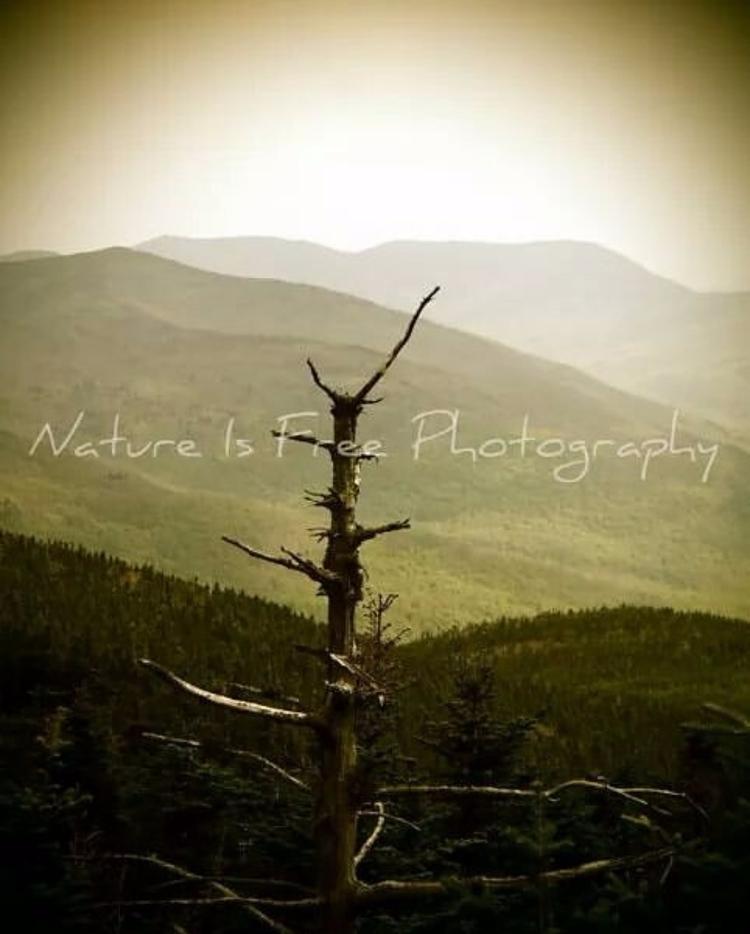 Wilderness necessity ... meant  - natureisfree | ello