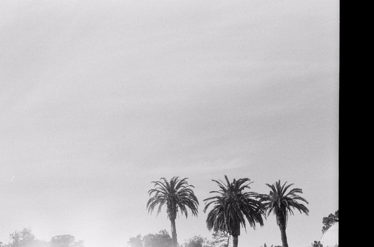 California - palmtrees, film, LA - maxrockatanksy | ello