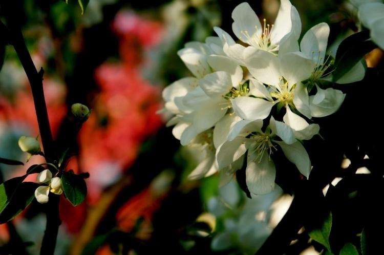bated breath, await big bloomin - mafo | ello