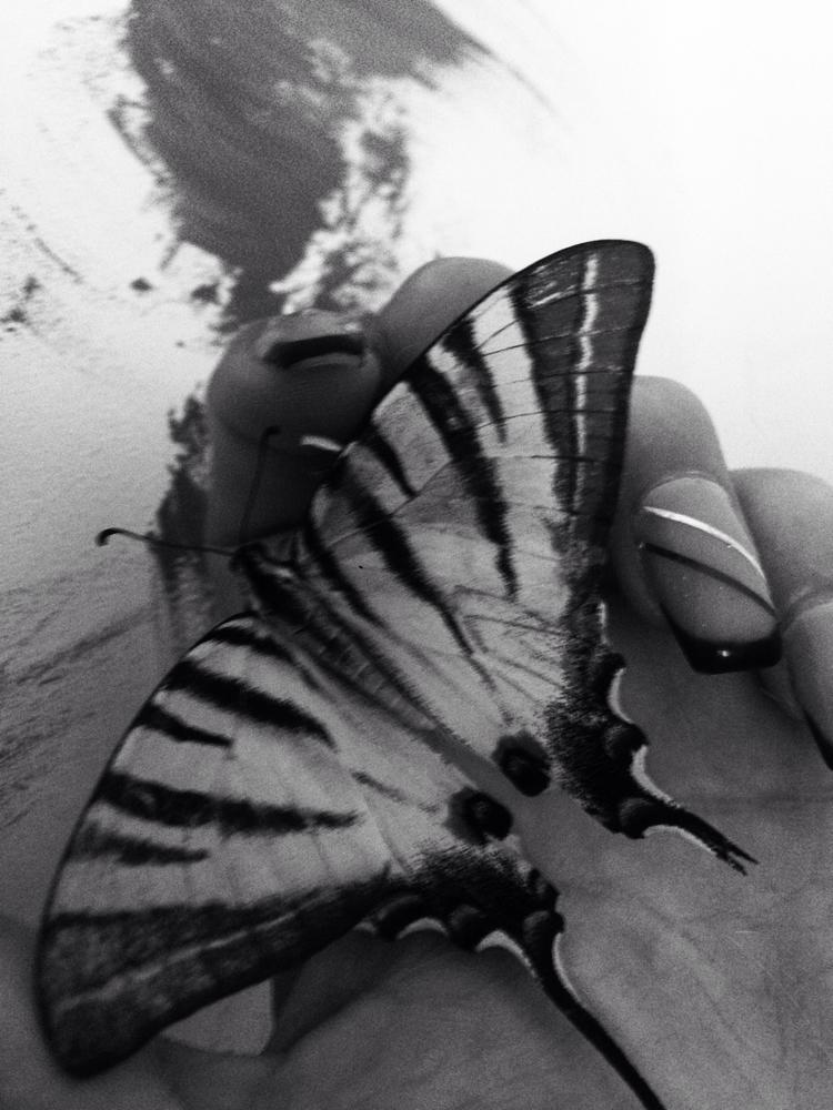 butterfly - nataliasrp   ello