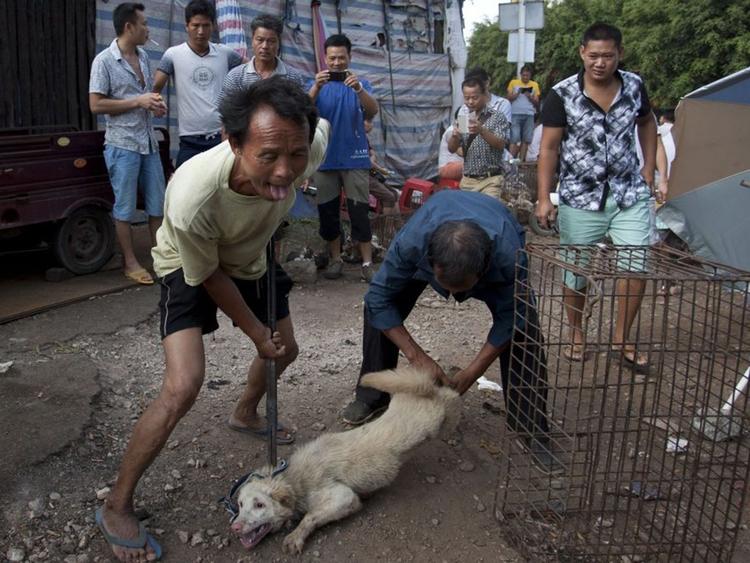 blogpost dealing dog meat trade - zoombubba   ello