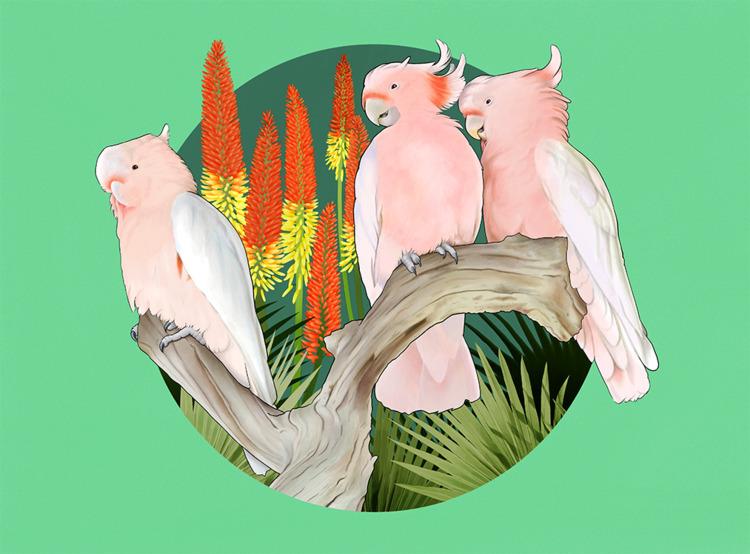 time drew parrots. cute cockato - nelidazubia | ello