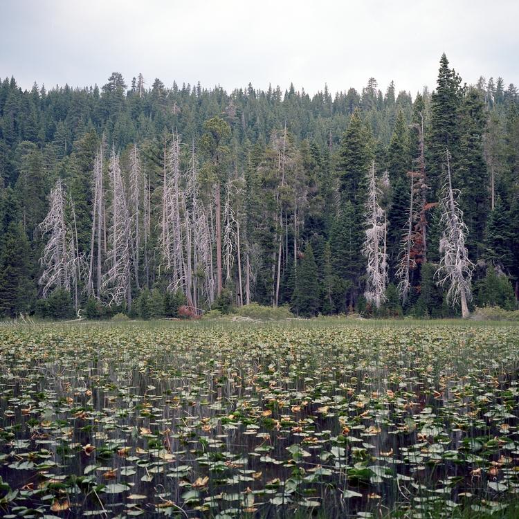 Lily pond Kodak Ektar 100 Mamiy - biosfear | ello