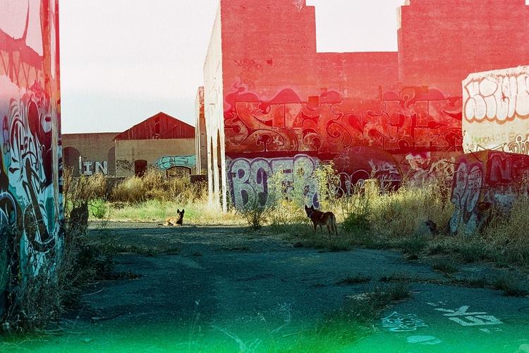 35mm, nikonf3#shotonfilm, psychedelicbluesfilm - teetonka | ello