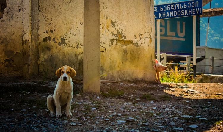quiet village life - voropaeff   ello