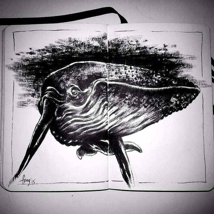 Megaptera novaeangliae. art - humpbackwhale - leonardofrey | ello