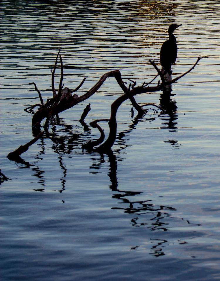 picture Lake Eola Park Orlando - tiarefait | ello