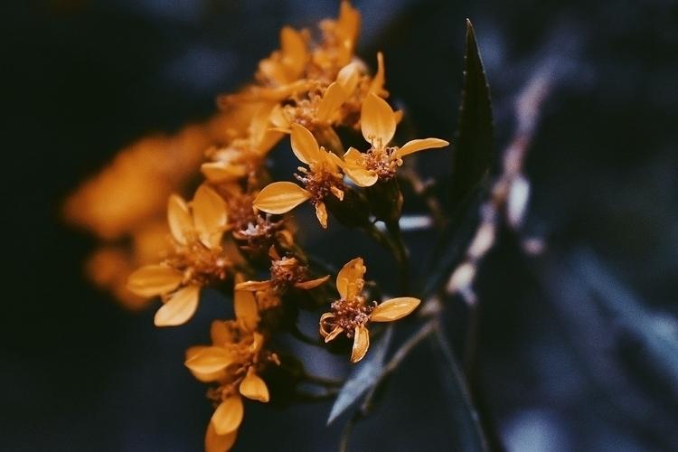 Yellow - nicolegarciam_ | ello